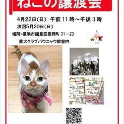 横浜 つるみ・猫のカギしっぽ譲渡会vol.45   JR鶴見駅歩5分