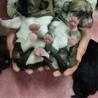 4月5日生まれて6匹みんな無事に サムネイル2