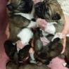 4月5日生まれて6匹みんな無事に サムネイル3