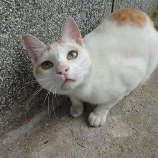 家族ができるといいな☆茶白猫