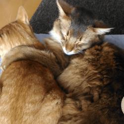 寄り添ううちの猫たちです
