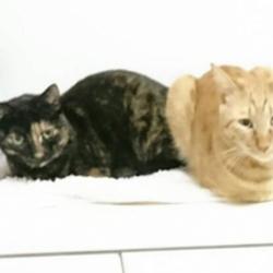 猫の譲渡会(神奈川県平塚市)