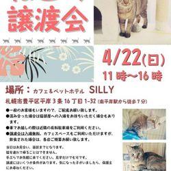 【札幌市】保護猫の譲渡会
