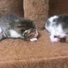 4/6 子猫 / 3ヶ月は様子見ます サムネイル3