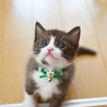 チョコレート色の子猫【空桜人】