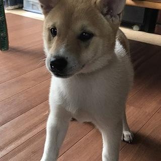 明るい性格の子犬♂3か月