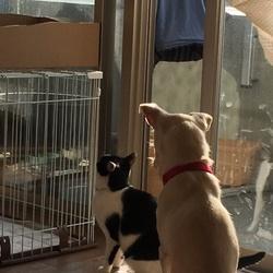 猫のオーラに撃沈