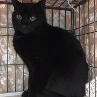 黒猫の女の子 ♪ グラちゃん