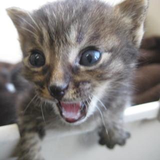 可愛い子猫ちゃんです(*^-^*)