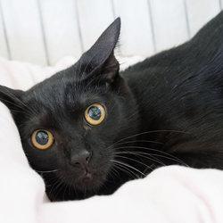 5月5日(土)三好ネコの会「猫の譲渡会」・愛知県みよし市