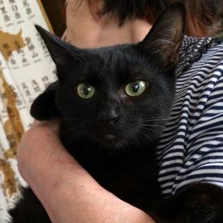 甘えん坊姉妹のビューティな黒猫さん♡
