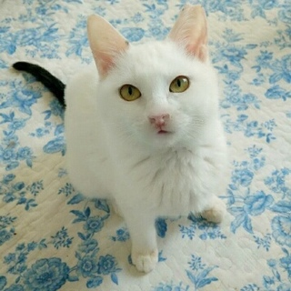 【4/15猫の未来とびら譲渡会】しっぽな4ヶ月