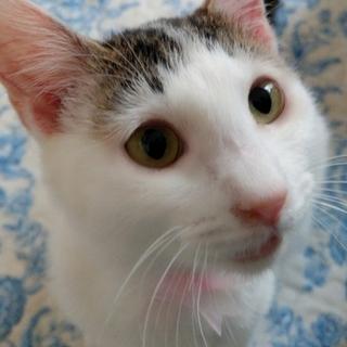 【4/15猫の未来とびら譲渡会】双葉4ヵ月