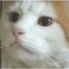 ビリケン猫★チャパツくん 推定1歳 ♂ @港区青山 サムネイル5