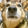 ネグレクトの可能性のある犬について
