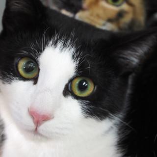 パッチリアイライン美猫【あらた】