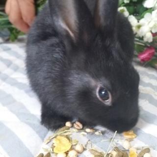 ミックス仔ウサギ