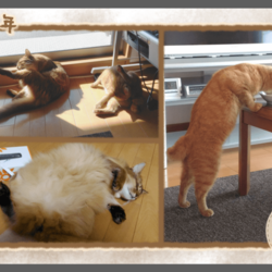 うちの猫たちのフォトアルバムを作りました(後編)