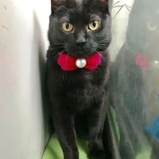 苦労して生きてきた美しい黒猫ハナちゃん