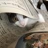 新聞読めないんだけど‥