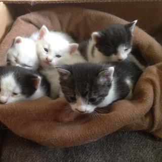 可愛い子猫たちの里親になってください!