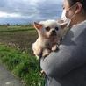 引退犬 チワワ 有り難うございました‼︎