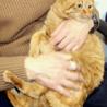猫の里親会 緑区徳重 中部ケーブルネットワーク東名局