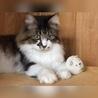 里山Cats(保護活動者)