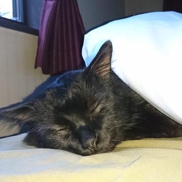 今日は病院でお耳の診察を受けたよ。お風呂も入ってベッドで爆睡中(^3^)