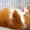 おなか触られるの大好きゴロゴロ猫のどんべえです♪ サムネイル2