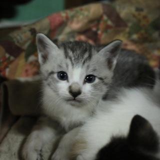 1ヶ月の四匹の子猫ちゃん