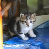 1ヶ月の四匹の子猫ちゃん サムネイル3