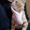保護猫 サムネイル2