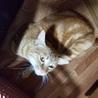 保護猫 サムネイル3