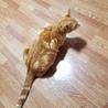 保護猫 サムネイル5