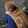 保護猫 サムネイル6