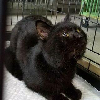 甘えん坊でとても可愛い黒猫君♡寂しそうです★動画有