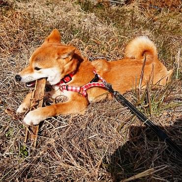 ひなたぼっこ中に見つけた竹でかみかみ(^-^)