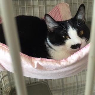 寄り目のかわいい一歳未満の黒白♂猫