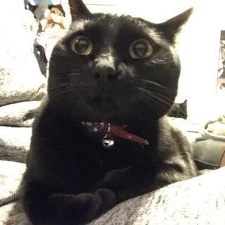 黒猫☆やまと