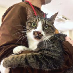 猫の譲渡会 名古屋市港区 みなと猫の会