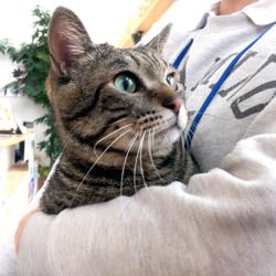 猫の譲渡会 名古屋市西区 サムネイル1