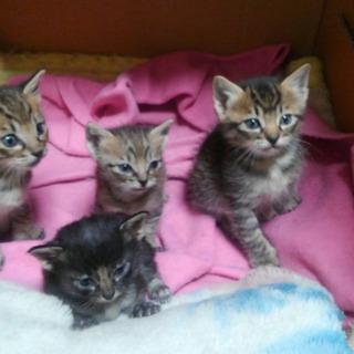 生後1か月のかわいい猫たちです。