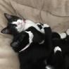 オス猫二匹 サムネイル3