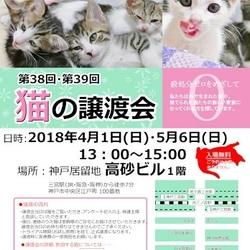 """猫の譲渡会in神戸三宮""""猫のミーナ"""""""