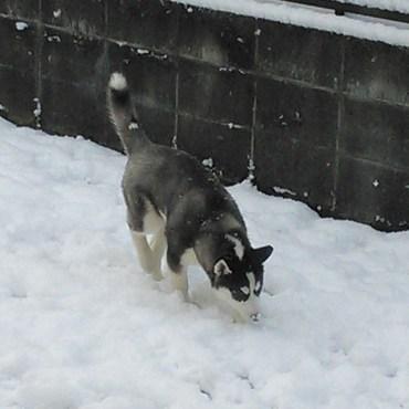 雪が似合うオンナ