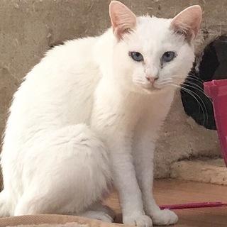 【ひとつ】白猫女子♪
