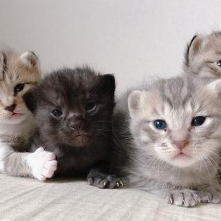4匹の子猫の里親さん募集しています。