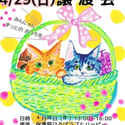 第8回☆ラブとハッピー猫の譲渡会