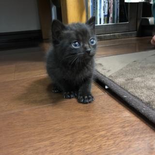 黒猫!里親募集!